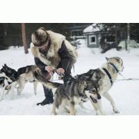 6 huskies y 300 caballos